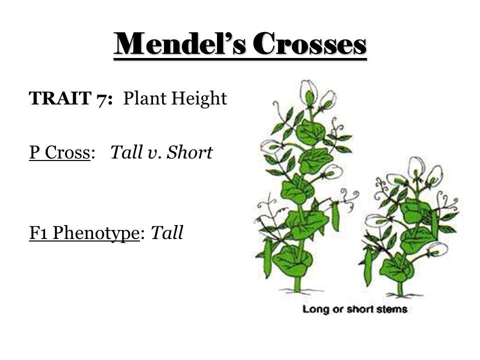 Mendel's Crosses TRAIT 7: Plant Height P Cross: Tall v. Short