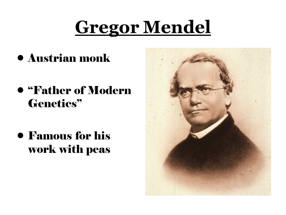 Gregor Mendel Austrian monk Father of Modern Genetics