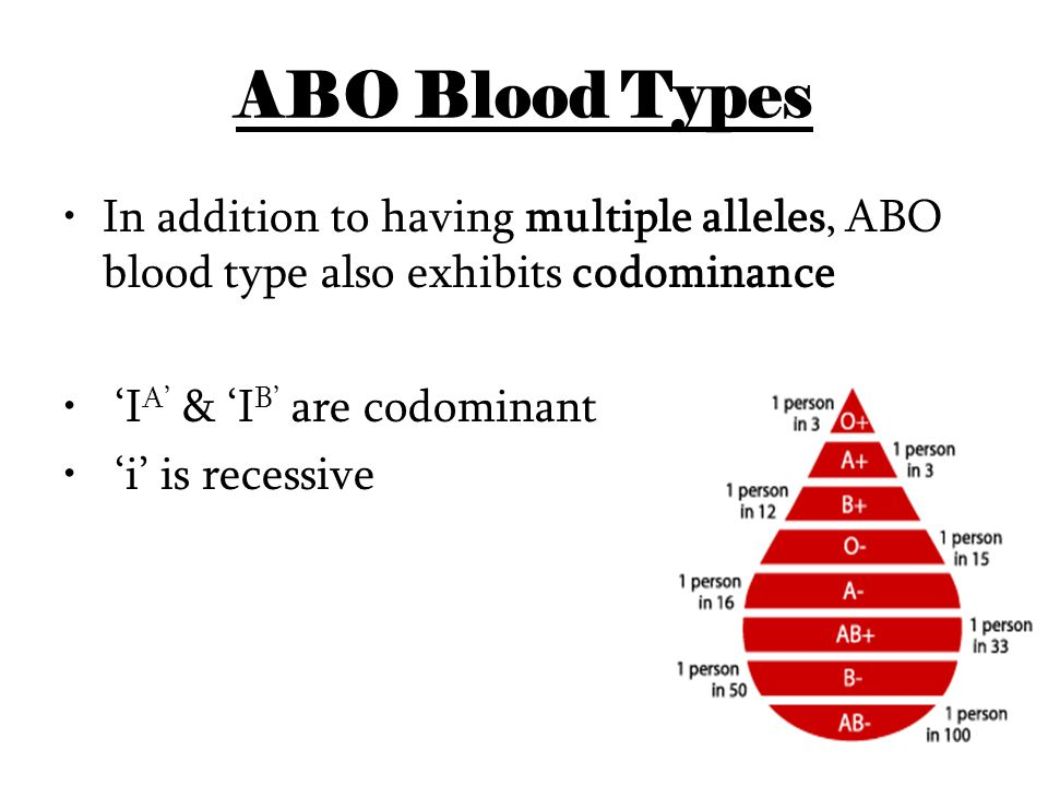 ABO Blood Types In addition to having multiple alleles, ABO blood type also exhibits codominance. 'IA' & 'IB' are codominant.