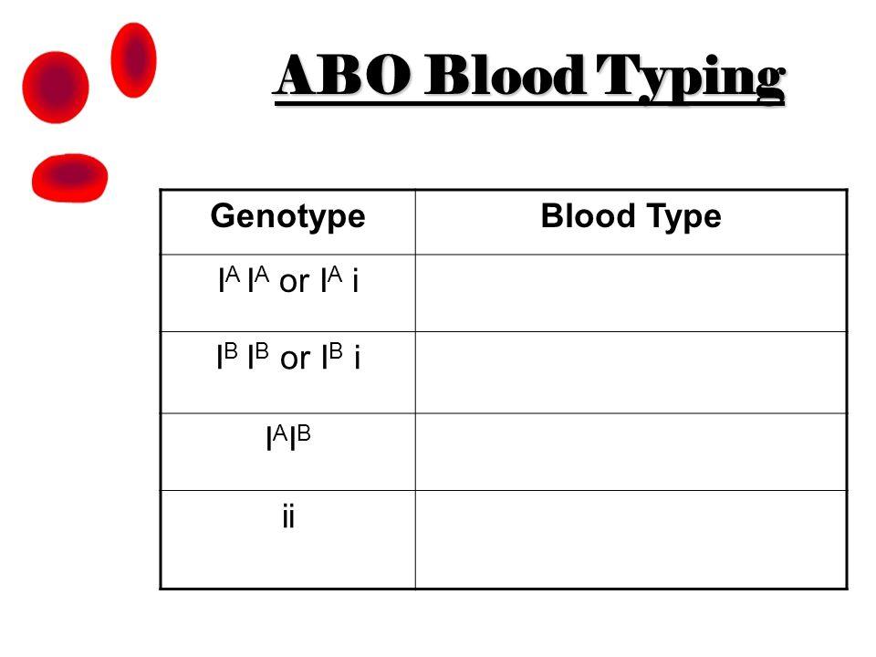ABO Blood Typing Genotype Blood Type IA IA or IA i IB IB or IB i IAIB