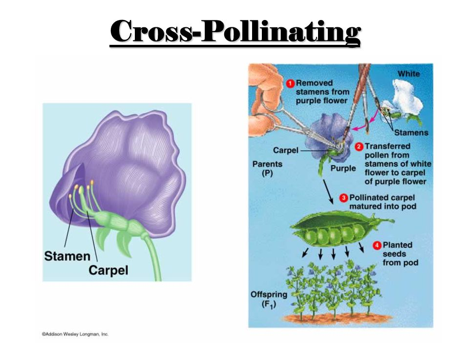 Cross-Pollinating