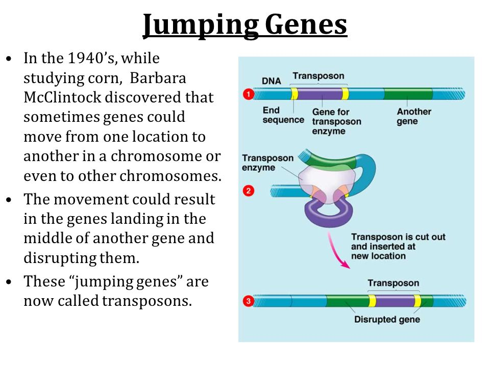 Jumping Genes