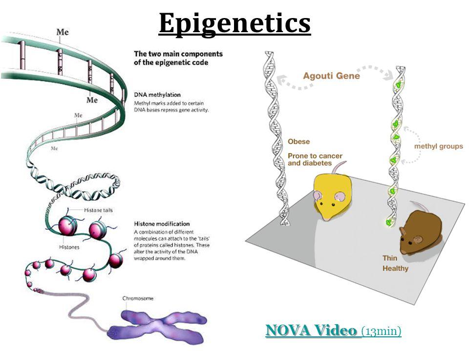 Epigenetics NOVA Video (13min)