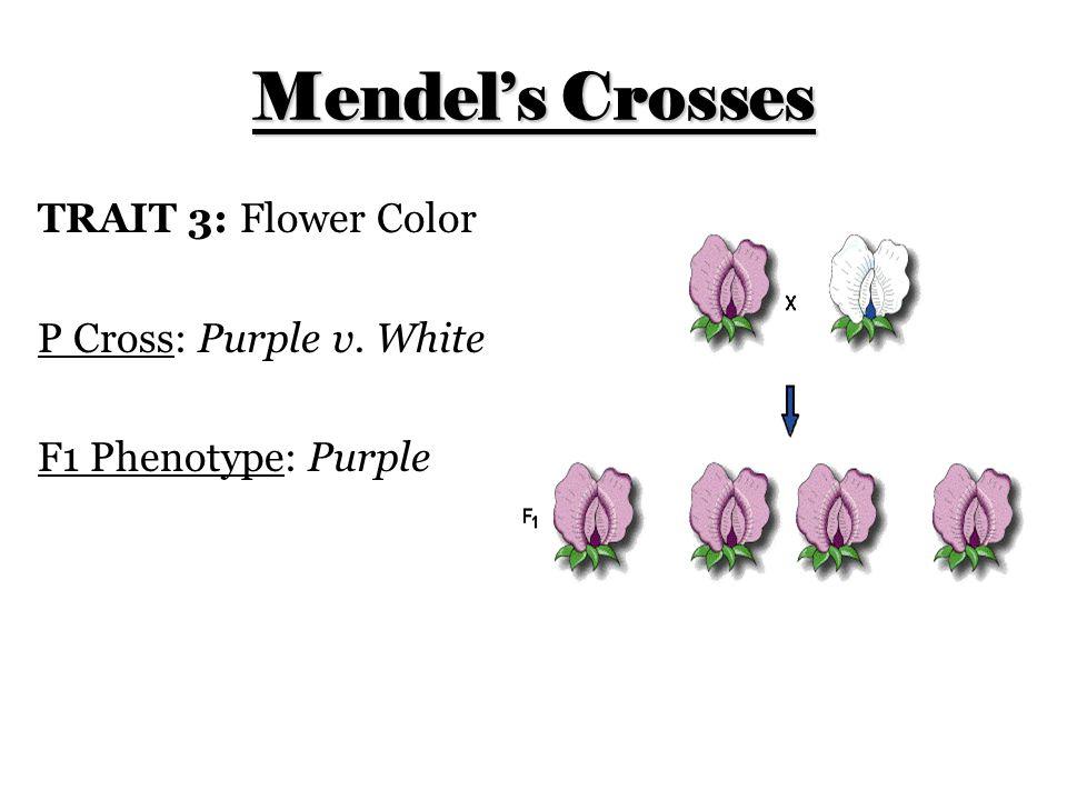 Mendel's Crosses TRAIT 3: Flower Color P Cross: Purple v. White
