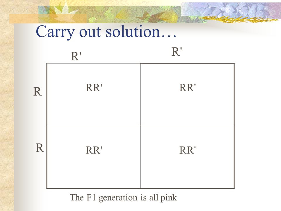 Carry out solution… R R RR R R The F1 generation is all pink