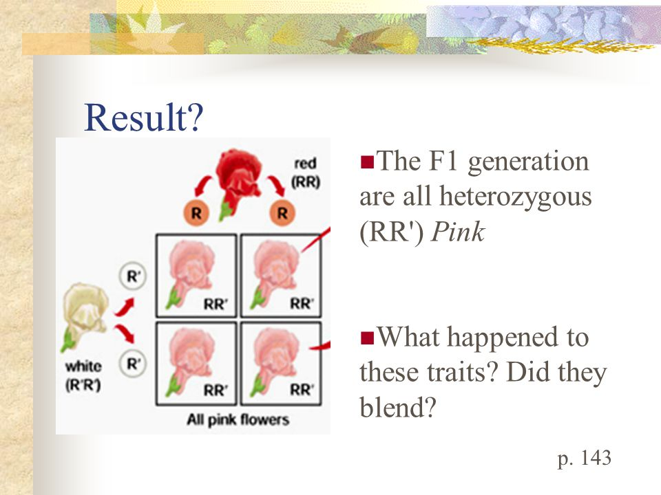 Result The F1 generation are all heterozygous (RR ) Pink