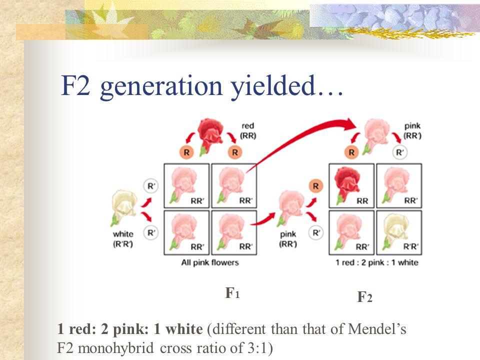 F2 generation yielded… F1 F2
