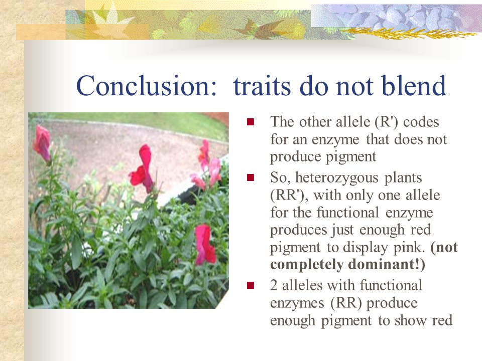 Conclusion: traits do not blend