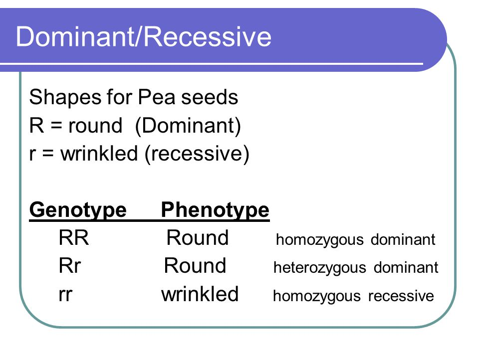 Dominant/Recessive Shapes for Pea seeds R = round (Dominant)
