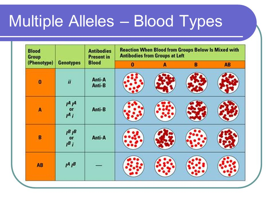 Multiple Alleles – Blood Types