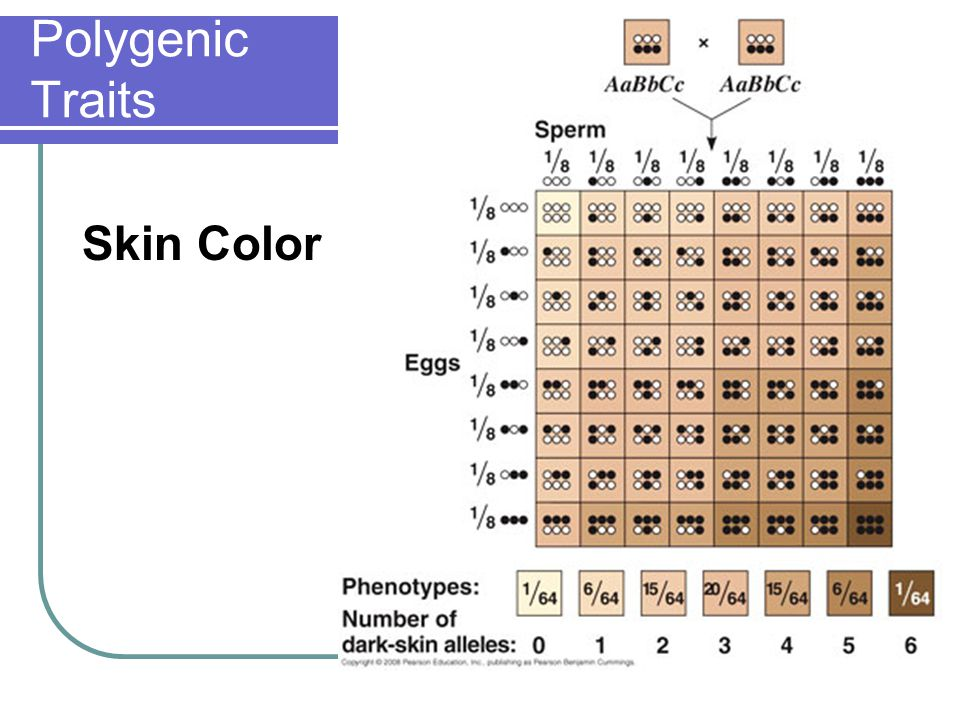 Polygenic Traits Skin Color