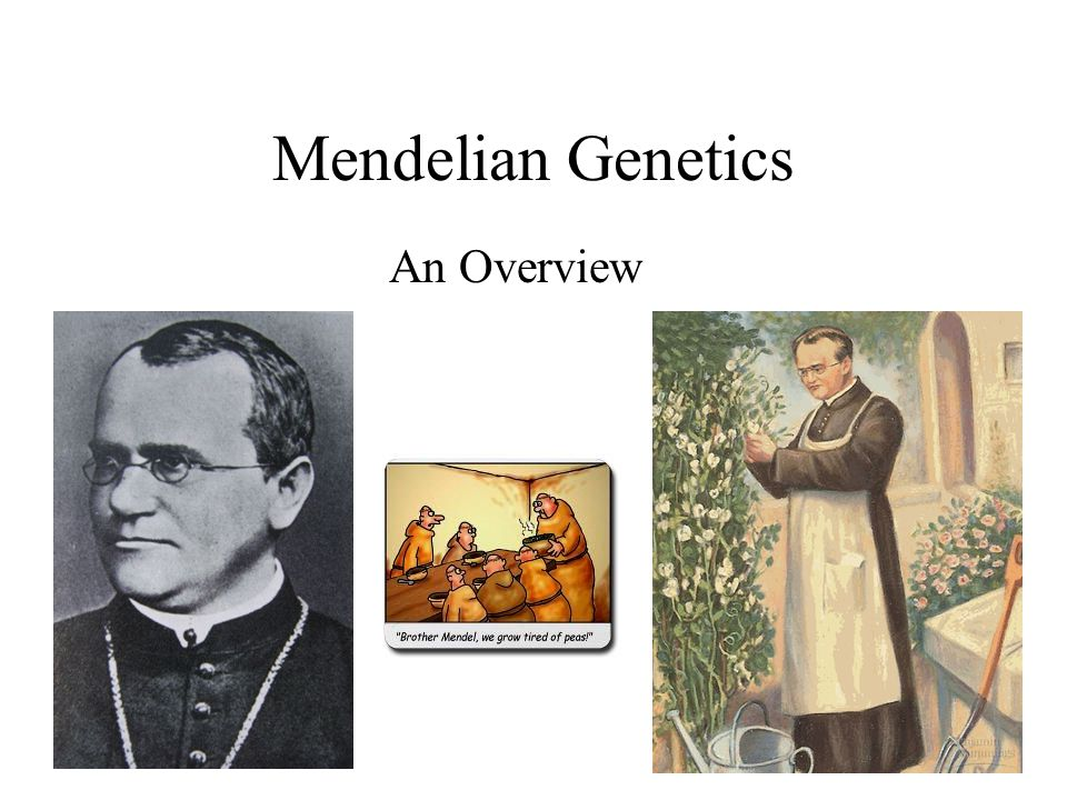 Mendelian Genetics An Overview