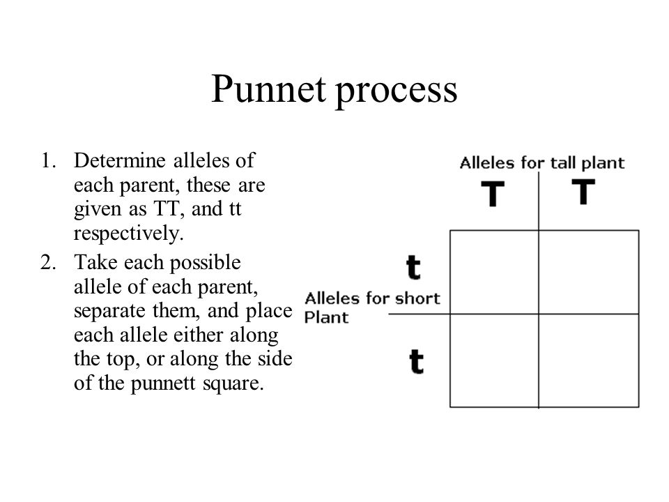 Punnet process Determine alleles of each parent, these are given as TT, and tt respectively.