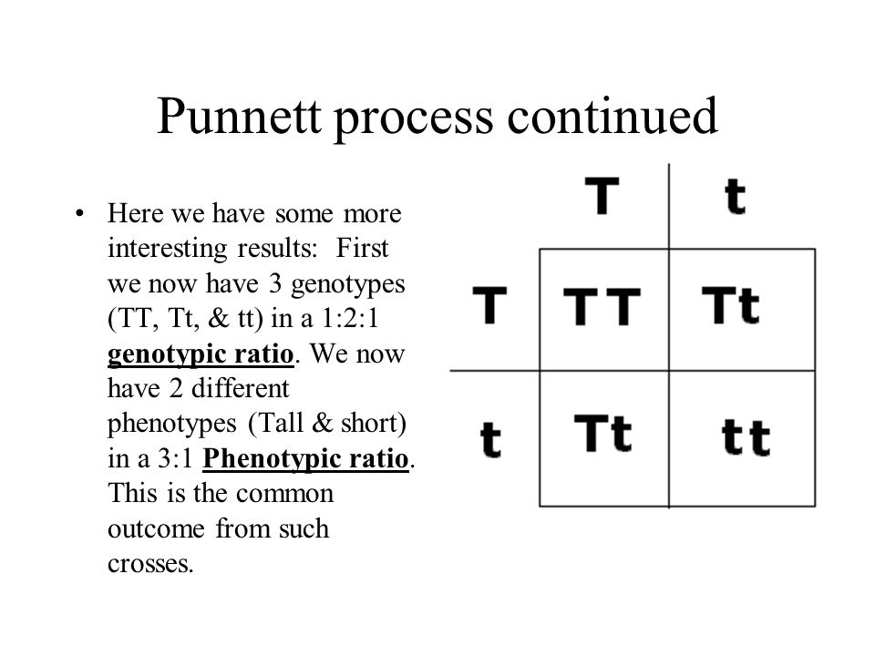 Punnett process continued