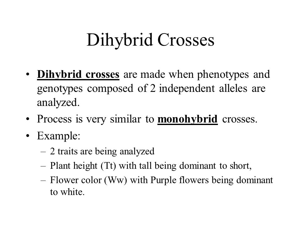 Dihybrid Crosses Dihybrid crosses are made when phenotypes and genotypes composed of 2 independent alleles are analyzed.