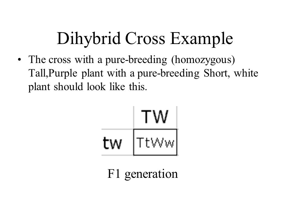 Dihybrid Cross Example