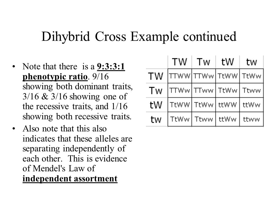 Dihybrid Cross Example continued
