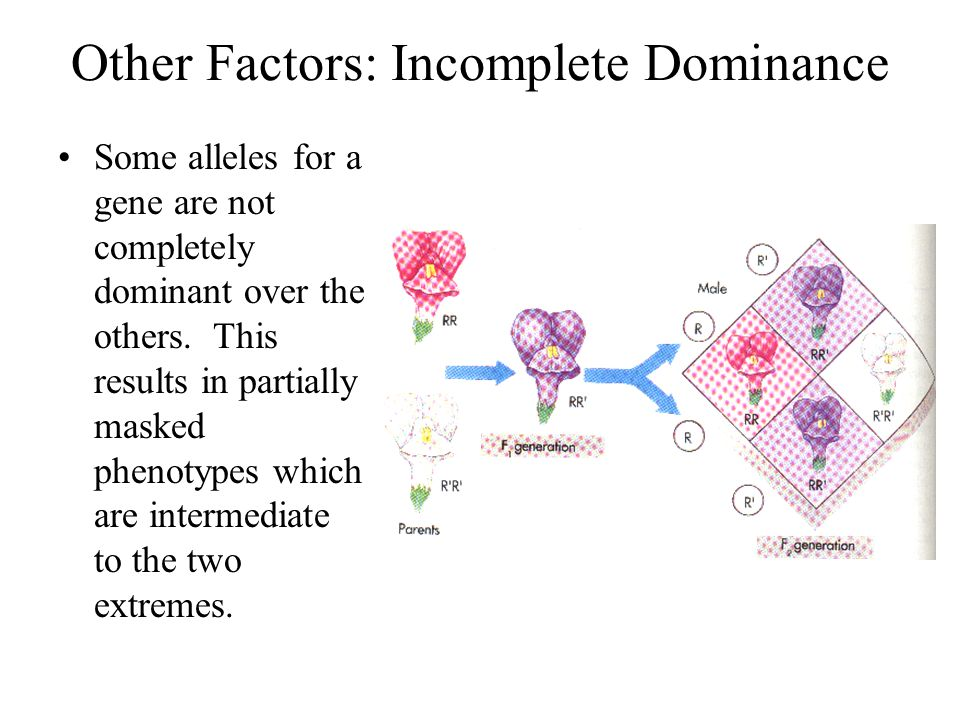 Other Factors: Incomplete Dominance