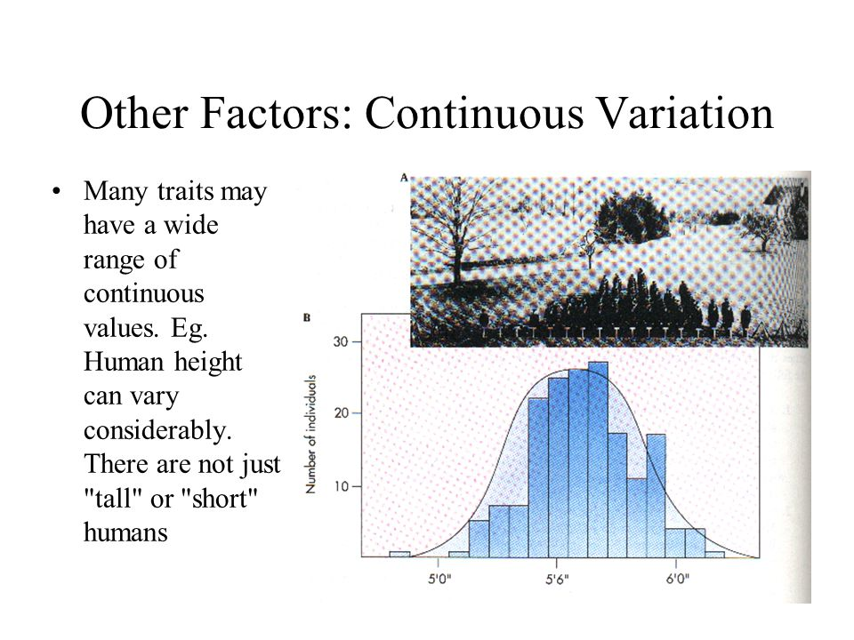 Other Factors: Continuous Variation