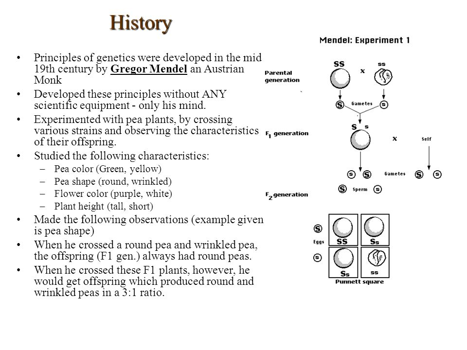 History Principles of genetics were developed in the mid 19th century by Gregor Mendel an Austrian Monk.