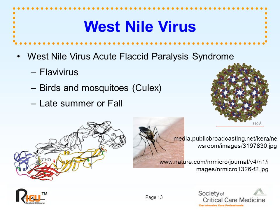 West Nile Virus West Nile Virus Acute Flaccid Paralysis Syndrome