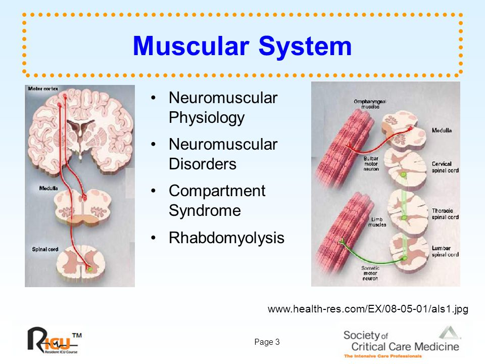 Muscular System Neuromuscular Physiology Neuromuscular Disorders