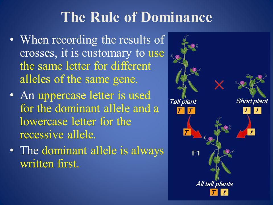 The Rule of Dominance When recording the results of crosses, it is customary to use the same letter for different alleles of the same gene.
