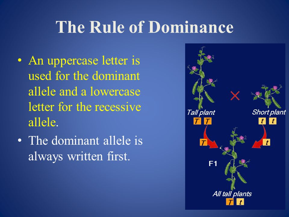The Rule of Dominance T. t. Tall plant. Short plant. All tall plants. F1.