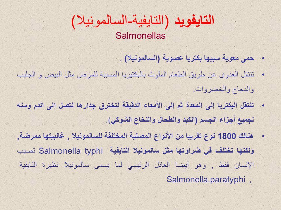 التايفويد (التايفية-السالمونيلا) Salmonellas