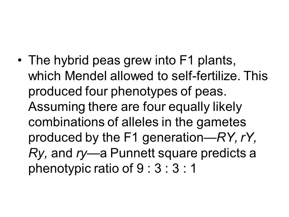 The hybrid peas grew into F1 plants, which Mendel allowed to self-fertilize.