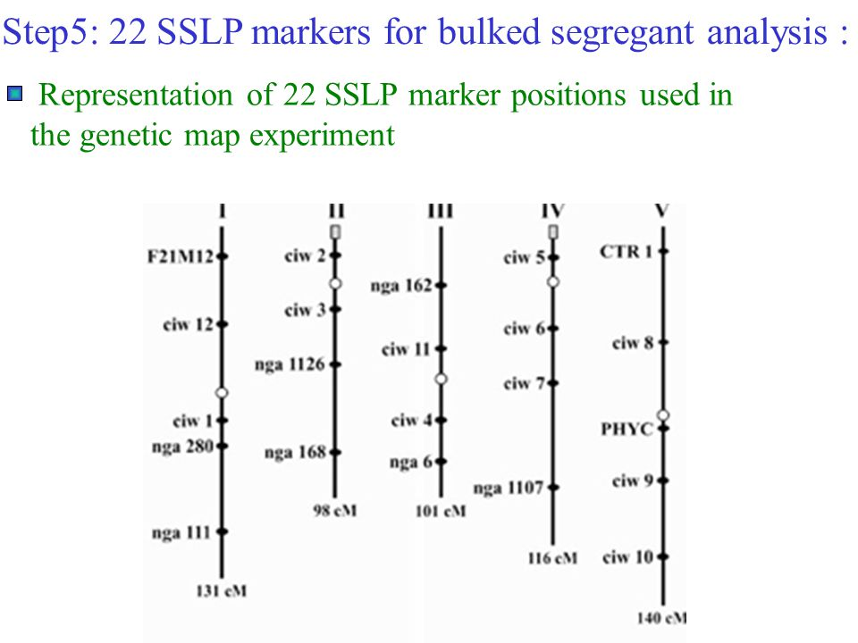 Step5: 22 SSLP markers for bulked segregant analysis :