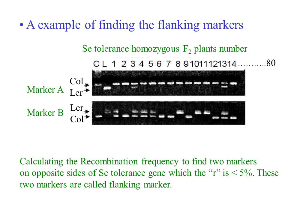 A example of finding the flanking markers