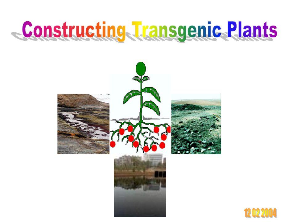 Constructing Transgenic Plants