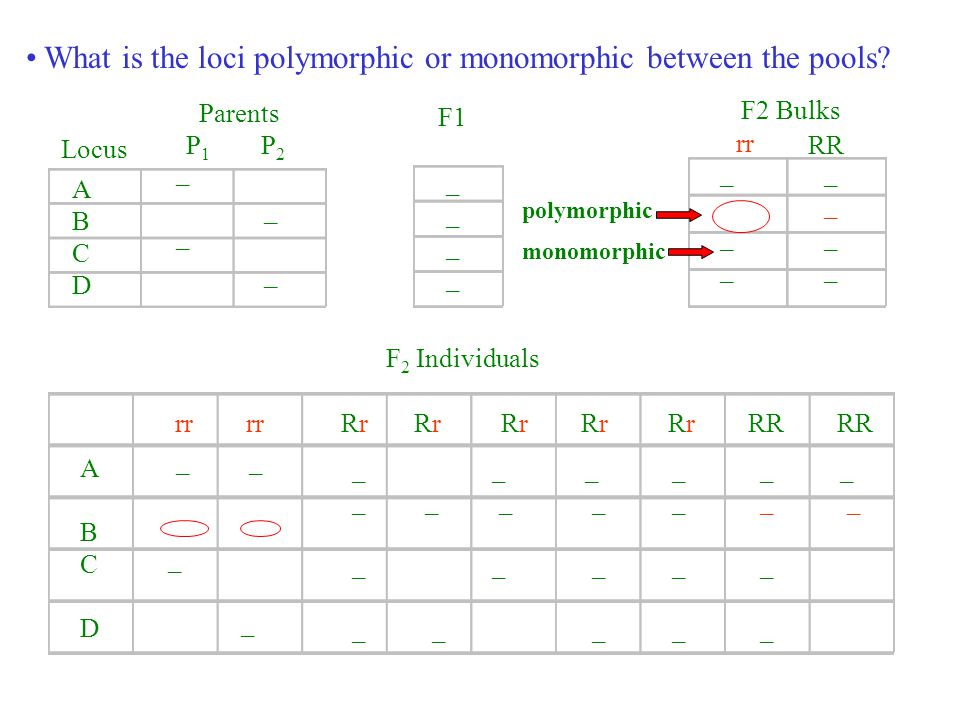 What is the loci polymorphic or monomorphic between the pools