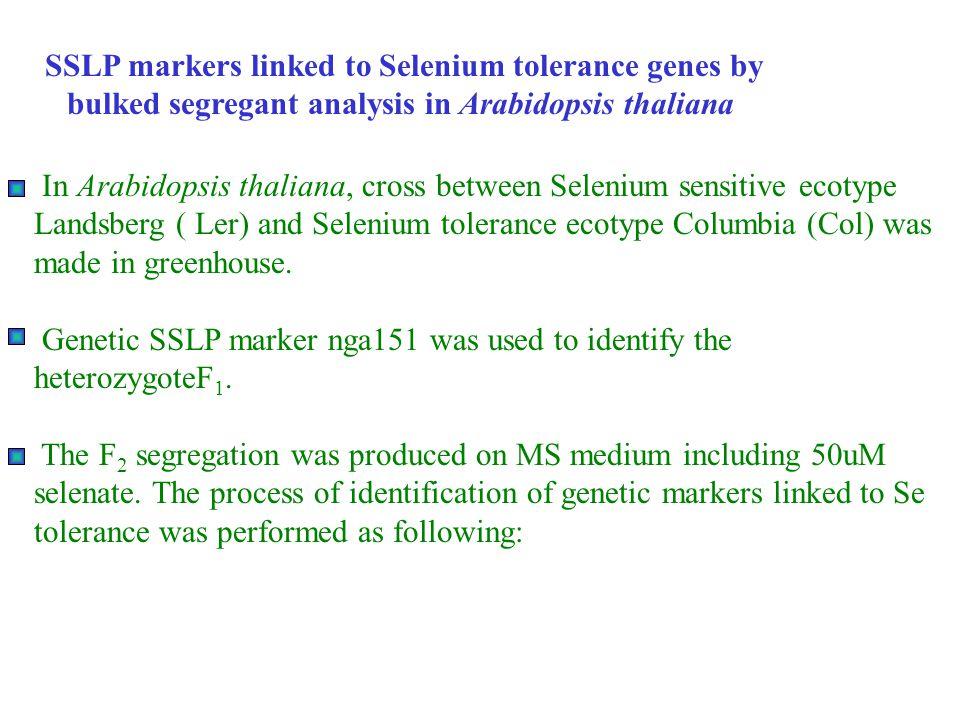 SSLP markers linked to Selenium tolerance genes by bulked segregant analysis in Arabidopsis thaliana