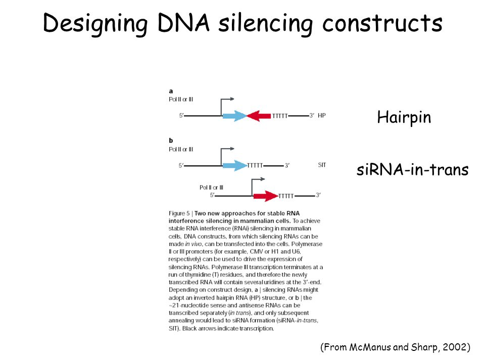 Designing DNA silencing constructs