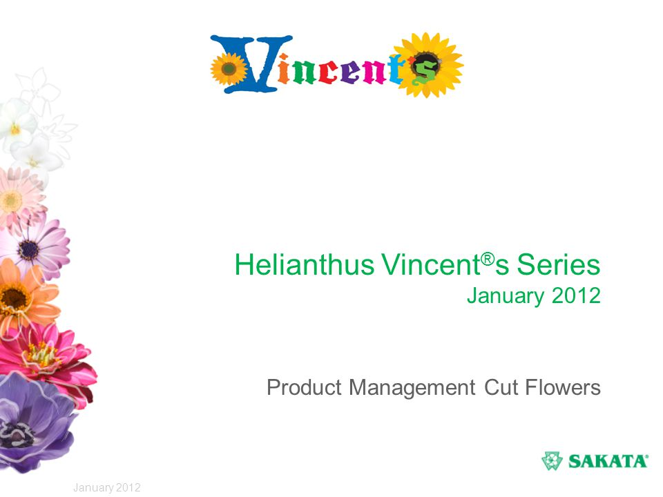 Sunflower F1 Vincent®s Series