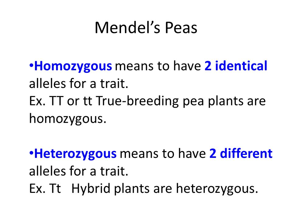 Mendel's Peas Homozygous means to have 2 identical alleles for a trait. Ex. TT or tt True-breeding pea plants are homozygous.