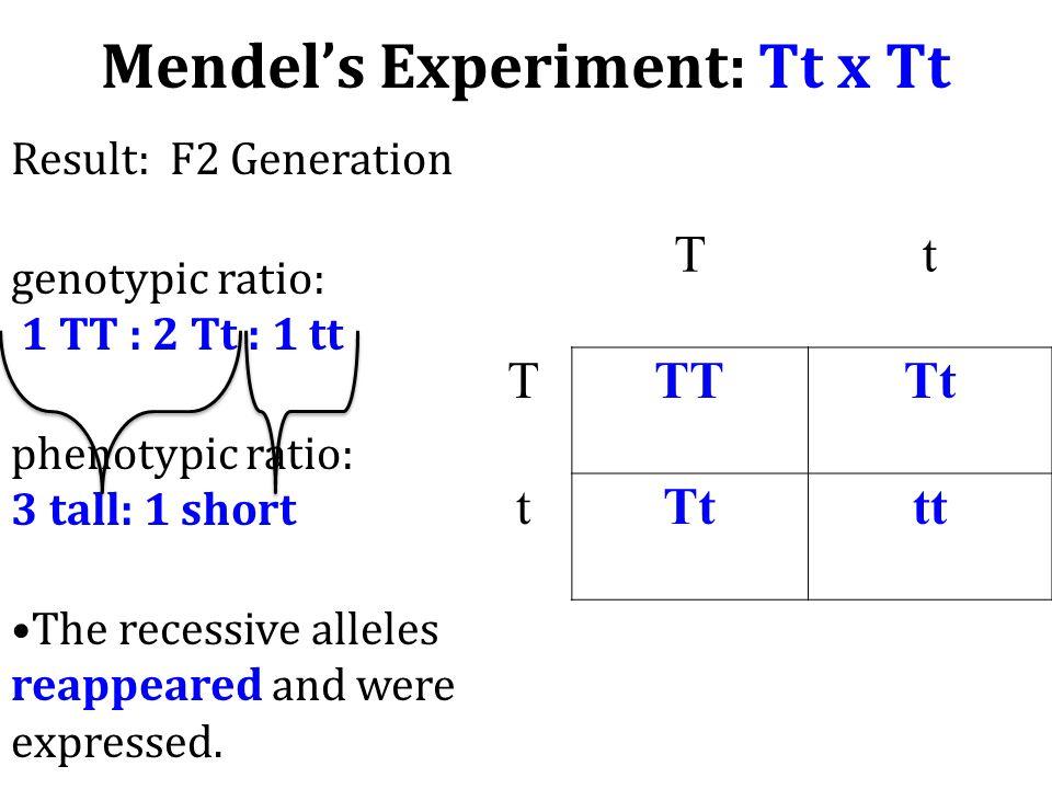 Mendel's Experiment: Tt x Tt