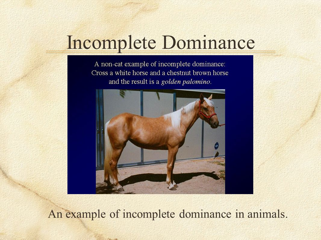 An example of incomplete dominance in animals.