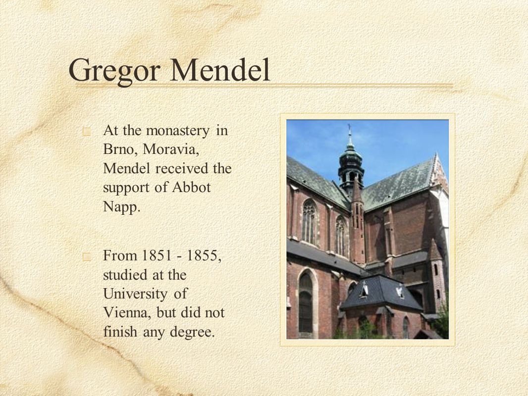 Gregor Mendel At the monastery in Brno, Moravia, Mendel received the support of Abbot Napp.