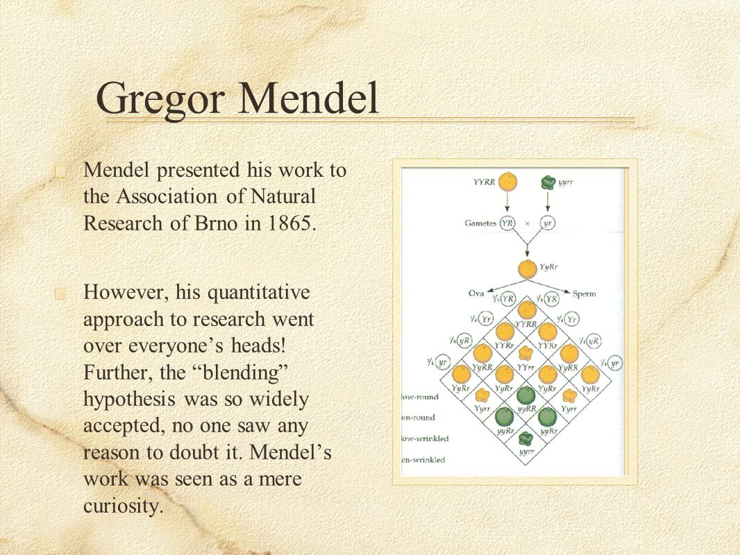 Gregor Mendel Mendel presented his work to the Association of Natural Research of Brno in 1865.