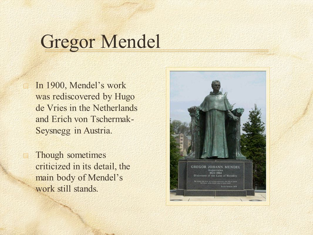 Gregor Mendel In 1900, Mendel's work was rediscovered by Hugo de Vries in the Netherlands and Erich von Tschermak-Seysnegg in Austria.