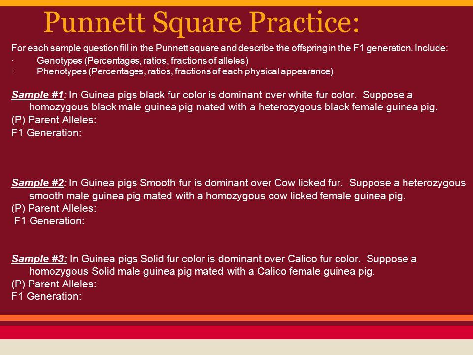 Punnett Square Practice:
