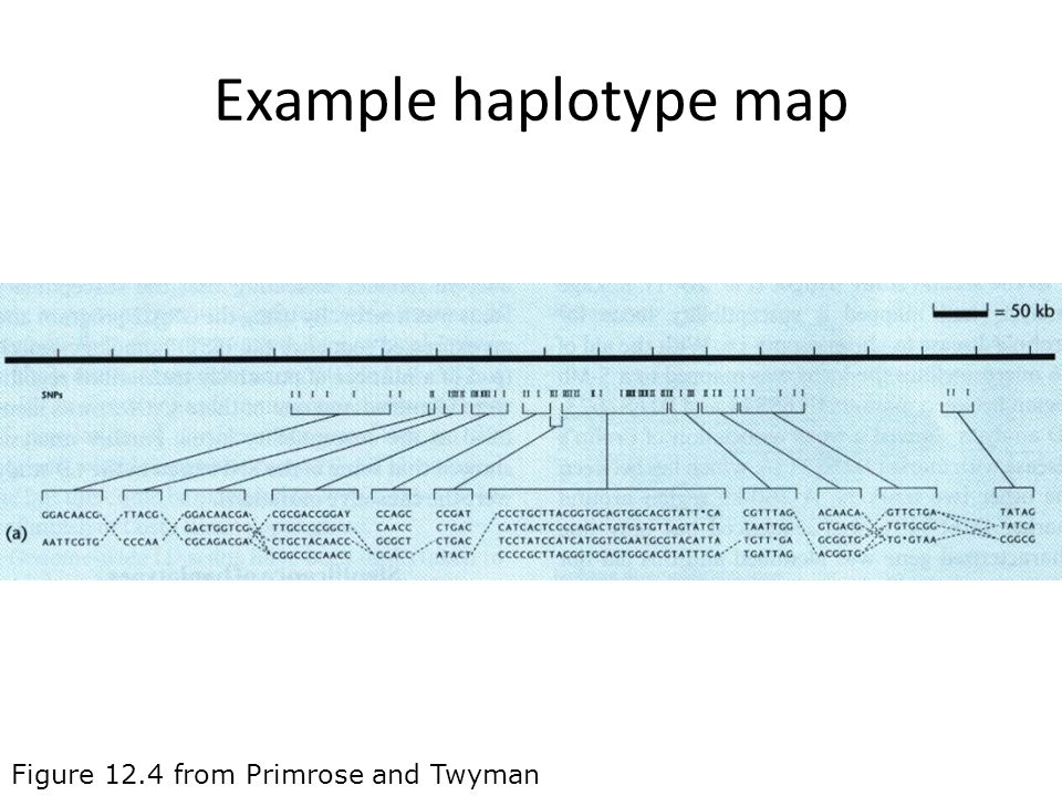 Example haplotype map Figure 12.4 from Primrose and Twyman