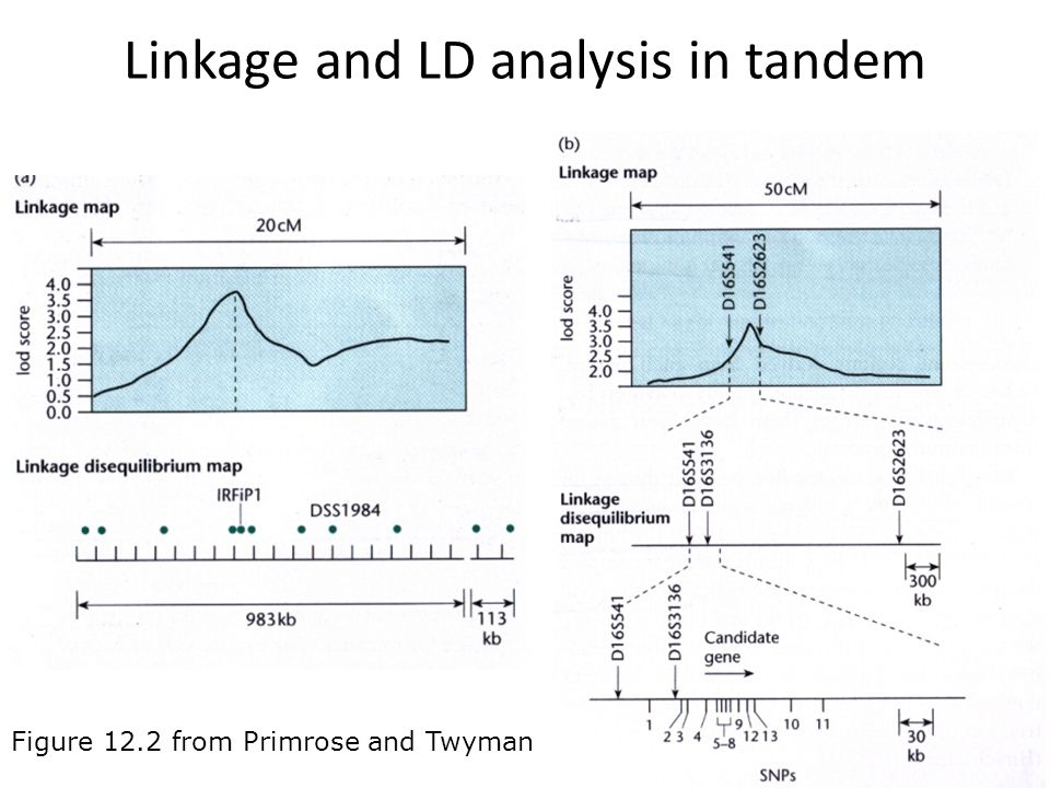 Linkage and LD analysis in tandem