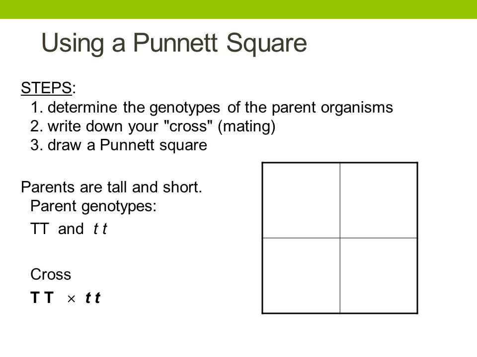 Using a Punnett Square STEPS: 1. determine the genotypes of the parent organisms 2. write down your cross (mating) 3. draw a Punnett square.