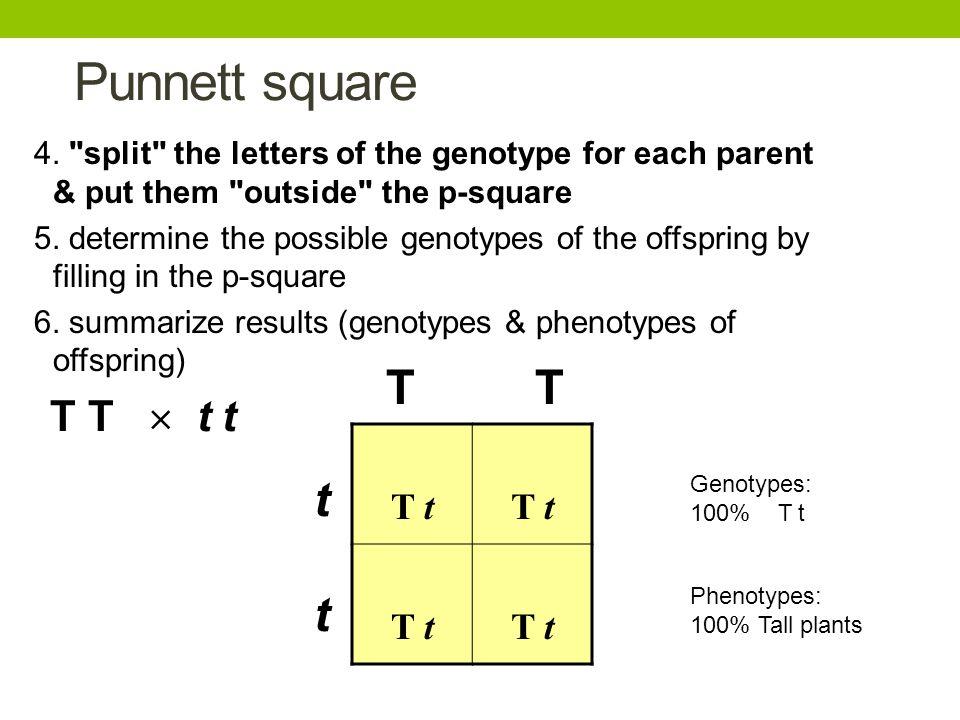 Punnett square T T t T T  t t T t