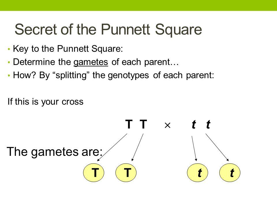 Secret of the Punnett Square