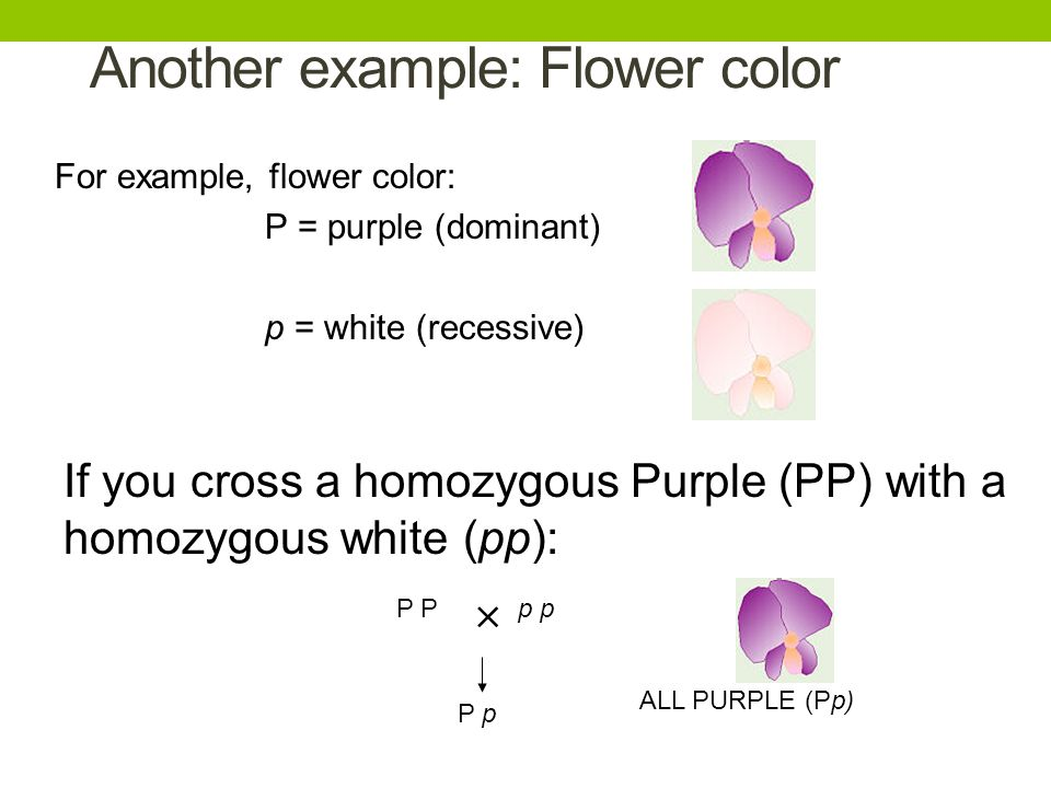 Another example: Flower color
